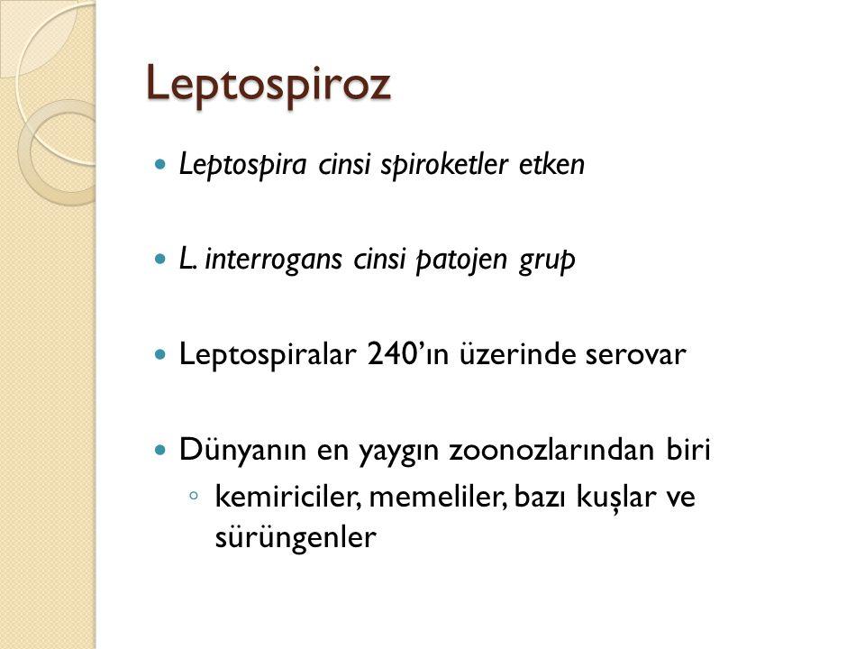 Leptospiroz Leptospira cinsi spiroketler etken L. interrogans cinsi patojen grup Leptospiralar 240'ın üzerinde serovar Dünyanın en yaygın zoonozlarınd