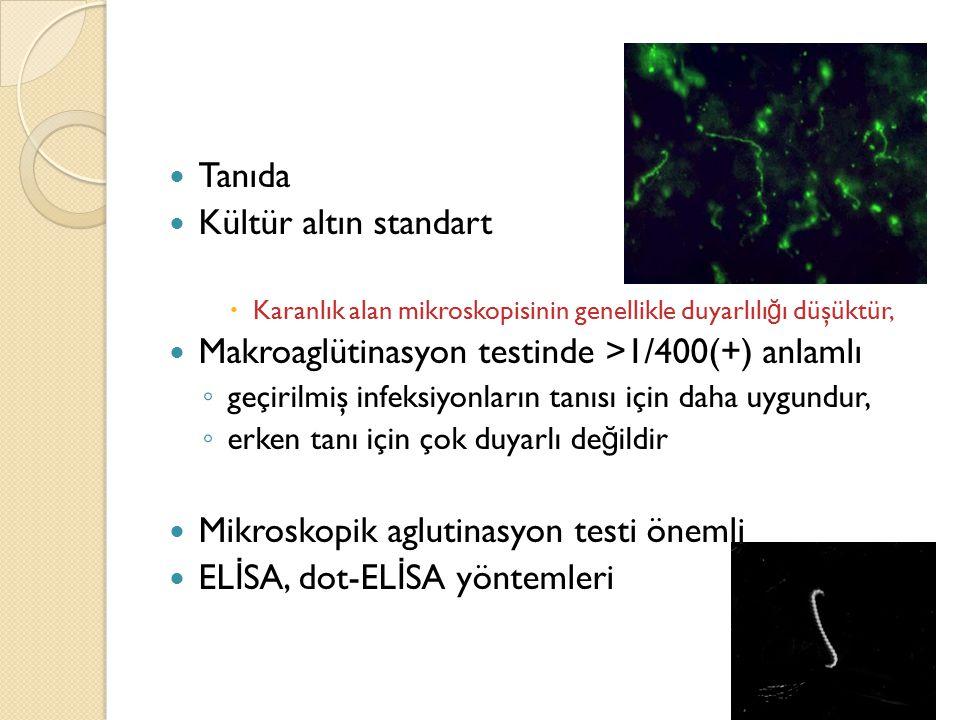 Tanıda Kültür altın standart  Karanlık alan mikroskopisinin genellikle duyarlılı ğ ı düşüktür, Makroaglütinasyon testinde >1/400(+) anlamlı ◦ geçiril