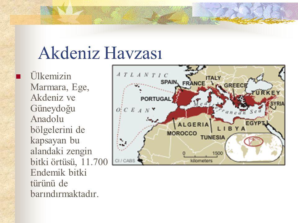 Akdeniz Havzası Ülkemizin Marmara, Ege, Akdeniz ve Güneydoğu Anadolu bölgelerini de kapsayan bu alandaki zengin bitki örtüsü, 11.700 Endemik bitki türünü de barındırmaktadır.