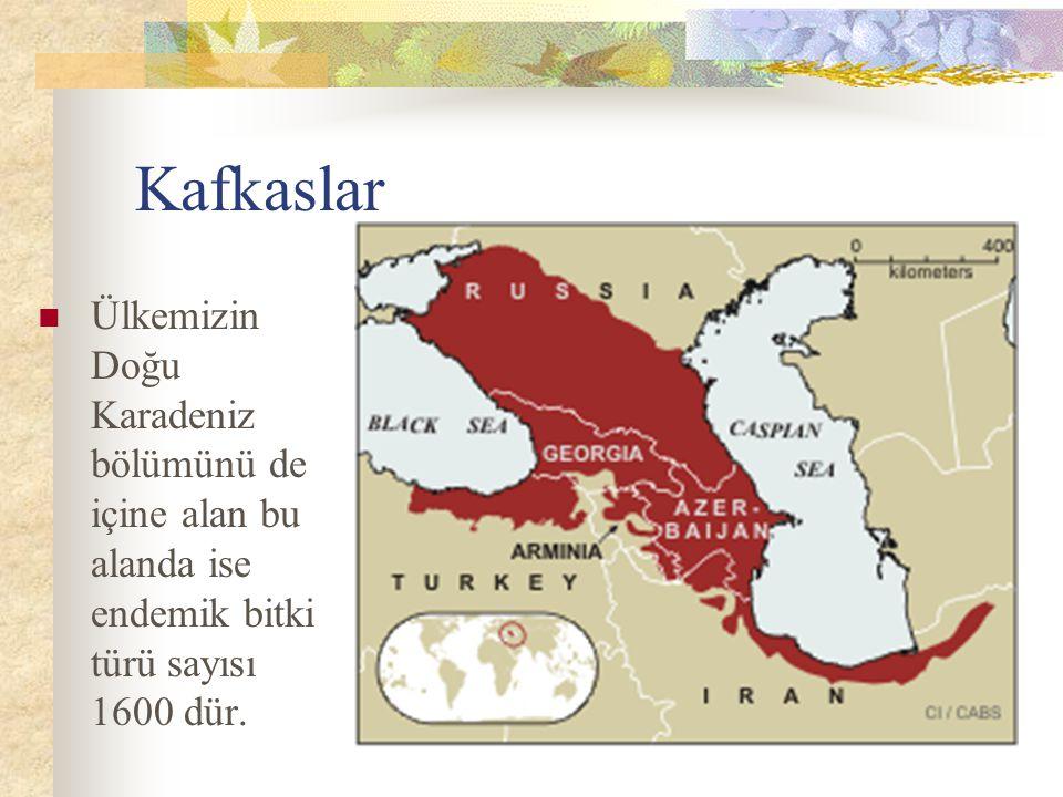 Kafkaslar Ülkemizin Doğu Karadeniz bölümünü de içine alan bu alanda ise endemik bitki türü sayısı 1600 dür.