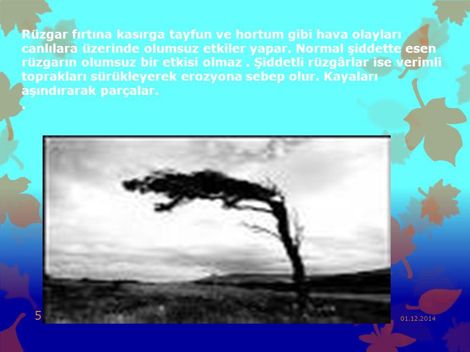 Rüzgar fırtına kasırga tayfun ve hortum gibi hava olayları canlılara üzerinde olumsuz etkiler yapar. Normal şiddette esen rüzgarın olumsuz bir etkisi