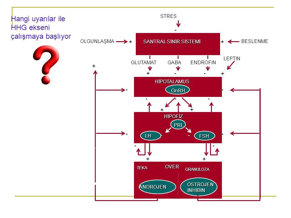 Tanner evrelemesi Testis hacmi  1-3 ml  P1  4-9 ml  P2  10-14 ml  P3  15-20 ml  P4