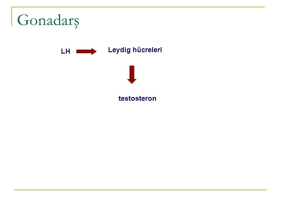 LH Granüloza hücreleri FSH östrojen androstenedionTeka hücreleri Gonadarş