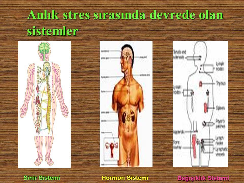Anlık stres sırasında devrede olan sistemler Sinir Sistemi Hormon Sistemi Bağışıklık Sistemi