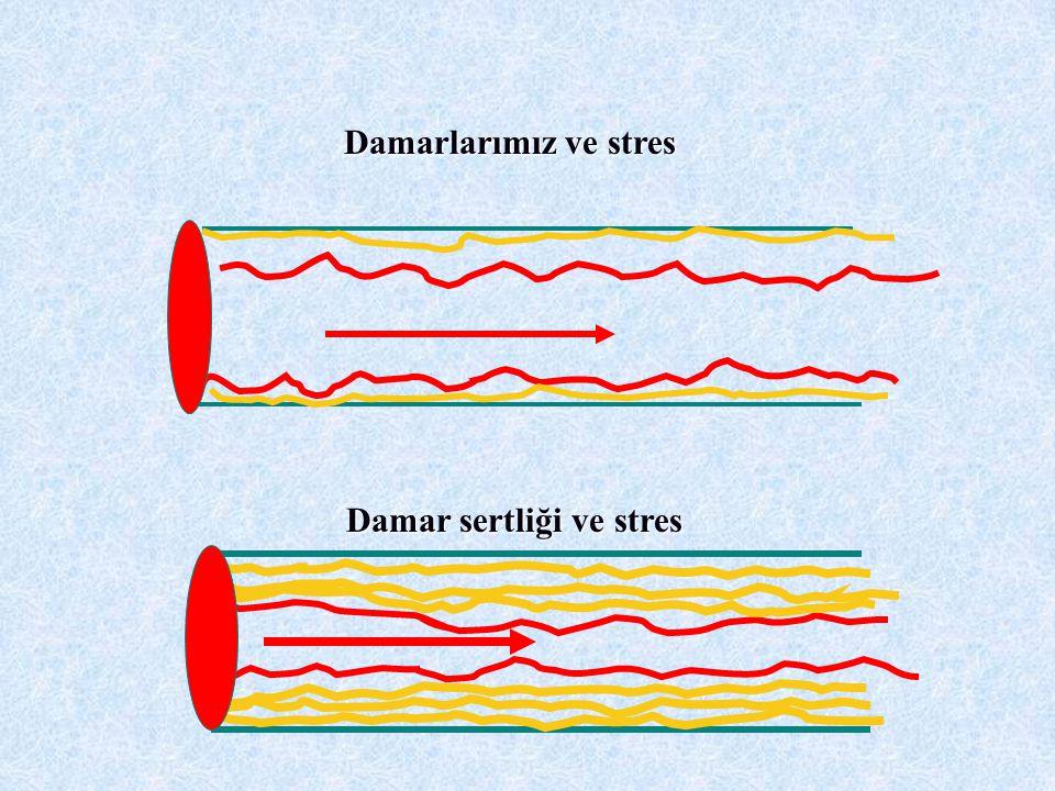 Damarlarımız ve stres Damar sertliği ve stres