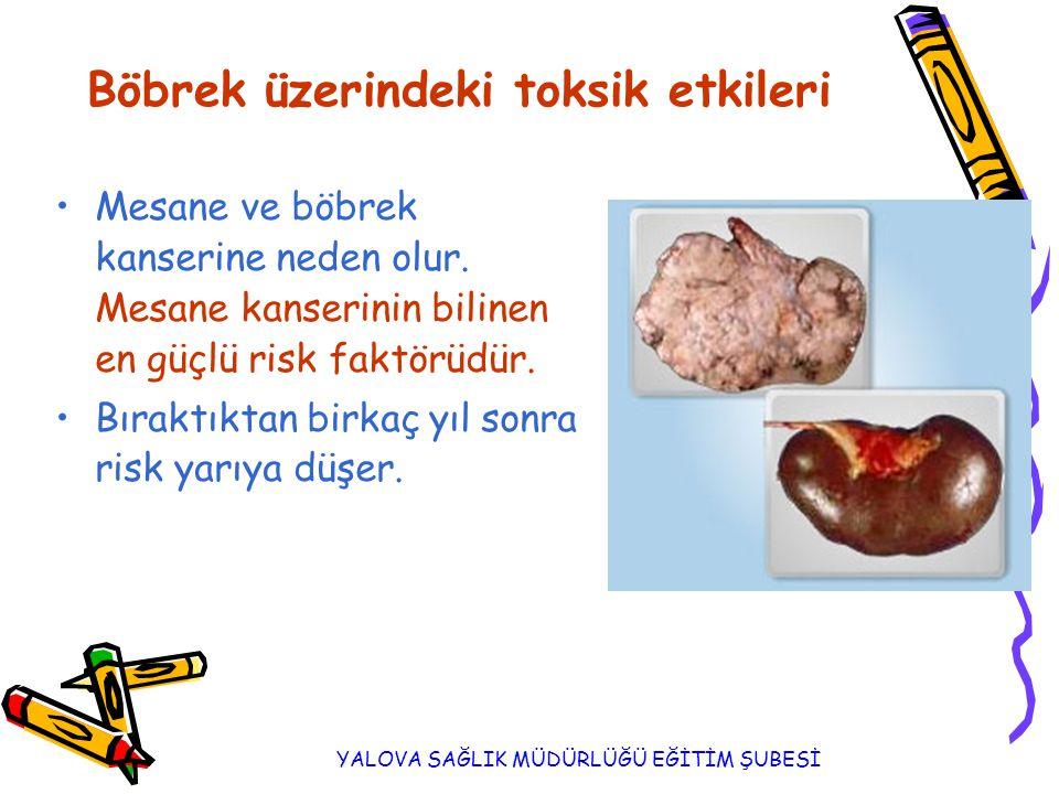 YALOVA SAĞLIK MÜDÜRLÜĞÜ EĞİTİM ŞUBESİ Böbrek üzerindeki toksik etkileri Mesane ve böbrek kanserine neden olur.