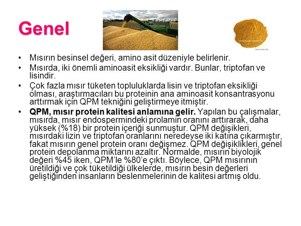 Genel Mısır nişastası üretiminin kuru yan ürünü mısır proteinidir.Mısır nişastası gluteniMısır proteini, büyükbaş hayvan, kümes hayvanları, balık ve köpek mamalarında ve diğer hayvan yemlerinde kullanılır.