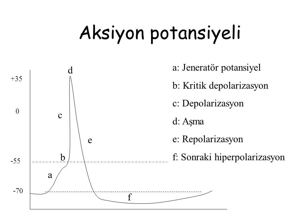 Aksiyon potansiyeli -70 -55 0 +35 a b c d e f a: Jeneratör potansiyel b: Kritik depolarizasyon c: Depolarizasyon d: Aşma e: Repolarizasyon f: Sonraki hiperpolarizasyon