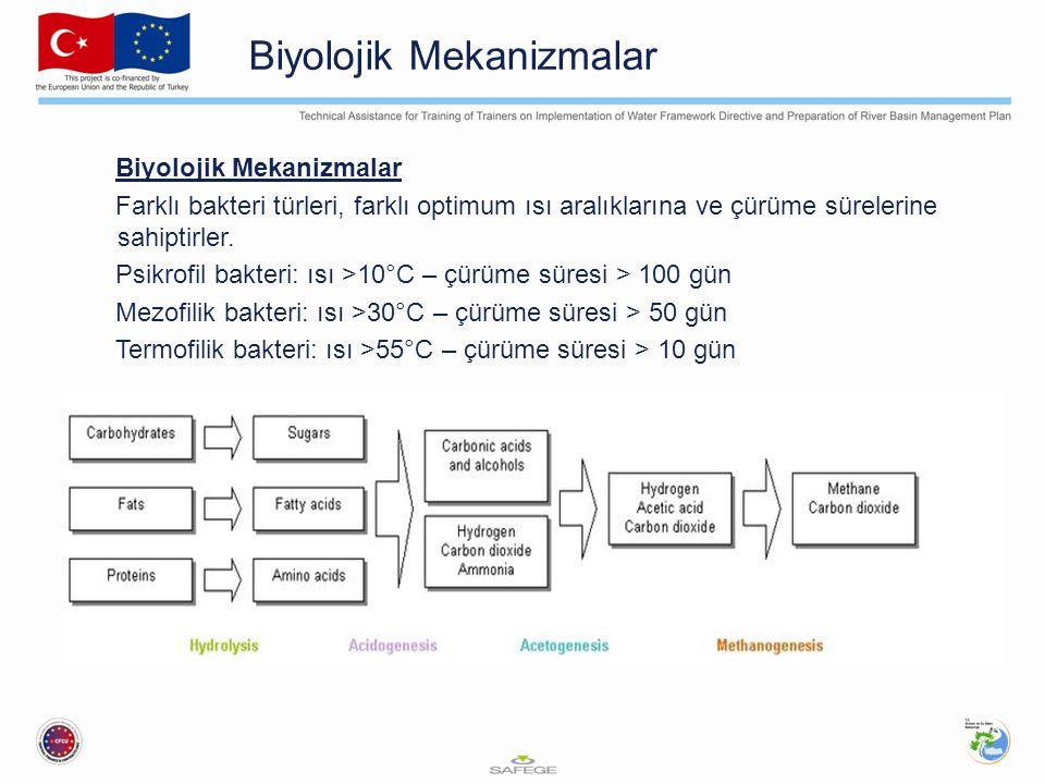 Biyolojik Mekanizmalar Farklı bakteri türleri, farklı optimum ısı aralıklarına ve çürüme sürelerine sahiptirler. Psikrofil bakteri: ısı >10°C – çürüme