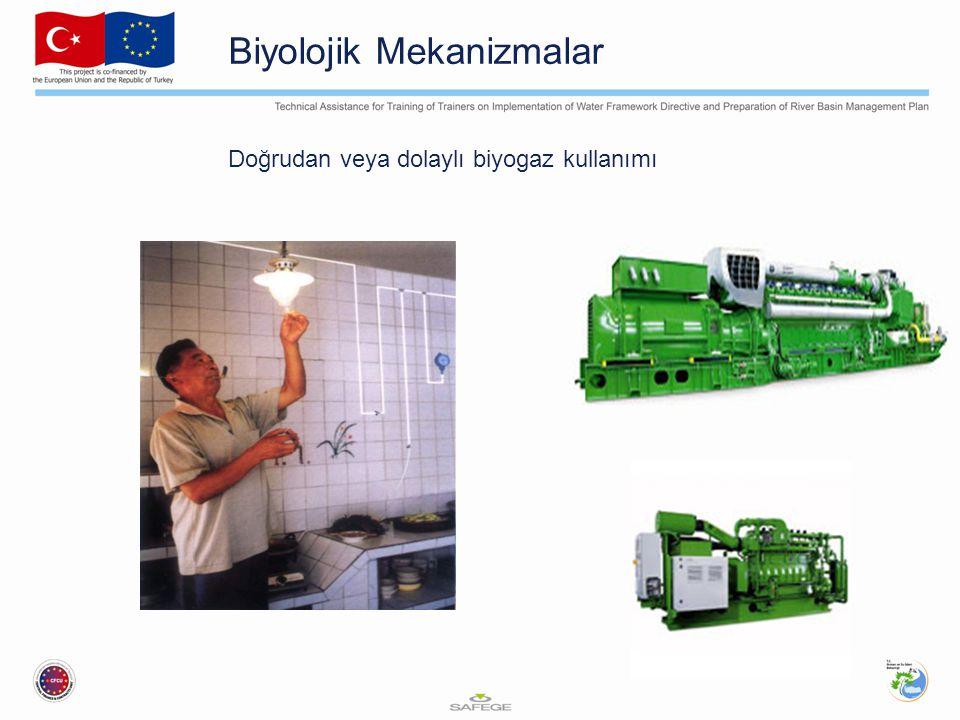 Biyolojik Mekanizmalar Doğrudan veya dolaylı biyogaz kullanımı