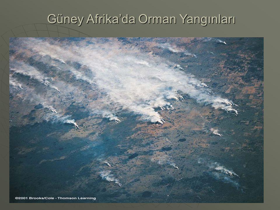 Güney Afrika'da Orman Yangınları