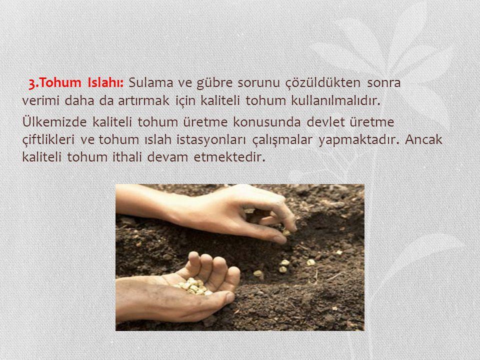 3.Tohum Islahı: Sulama ve gübre sorunu çözüldükten sonra verimi daha da artırmak için kaliteli tohum kullanılmalıdır. Ülkemizde kaliteli tohum üretme