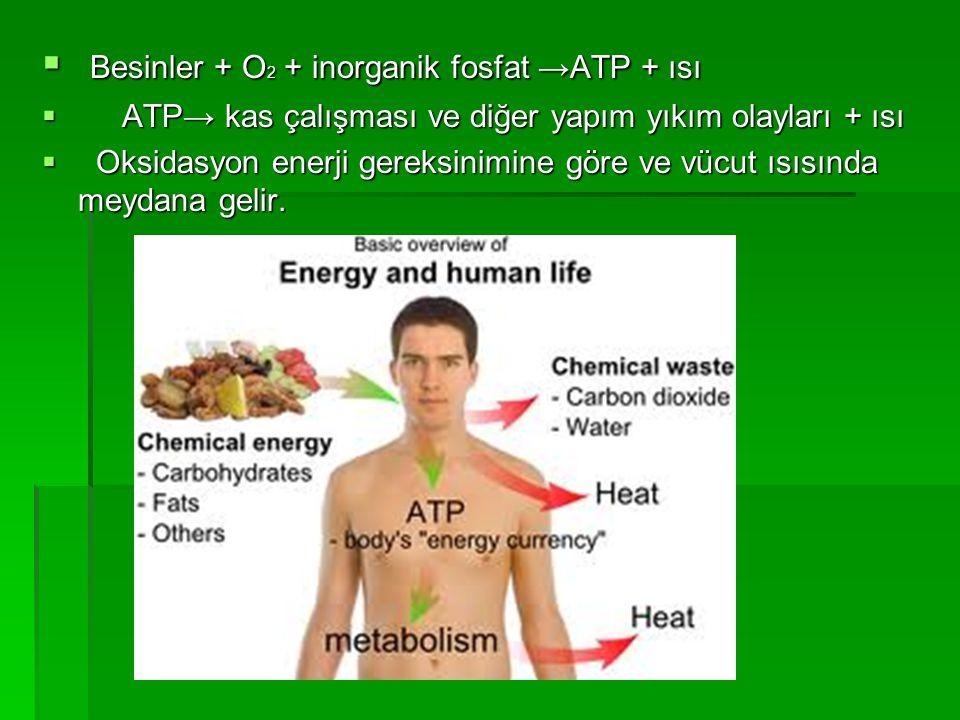  Besinler + O 2 + inorganik fosfat →ATP + ısı  ATP→ kas çalışması ve diğer yapım yıkım olayları + ısı  Oksidasyon enerji gereksinimine göre ve vücu