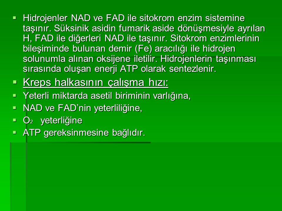  Hidrojenler NAD ve FAD ile sitokrom enzim sistemine taşınır. Süksinik asidin fumarik aside dönüşmesiyle ayrılan H, FAD ile diğerleri NAD ile taşınır