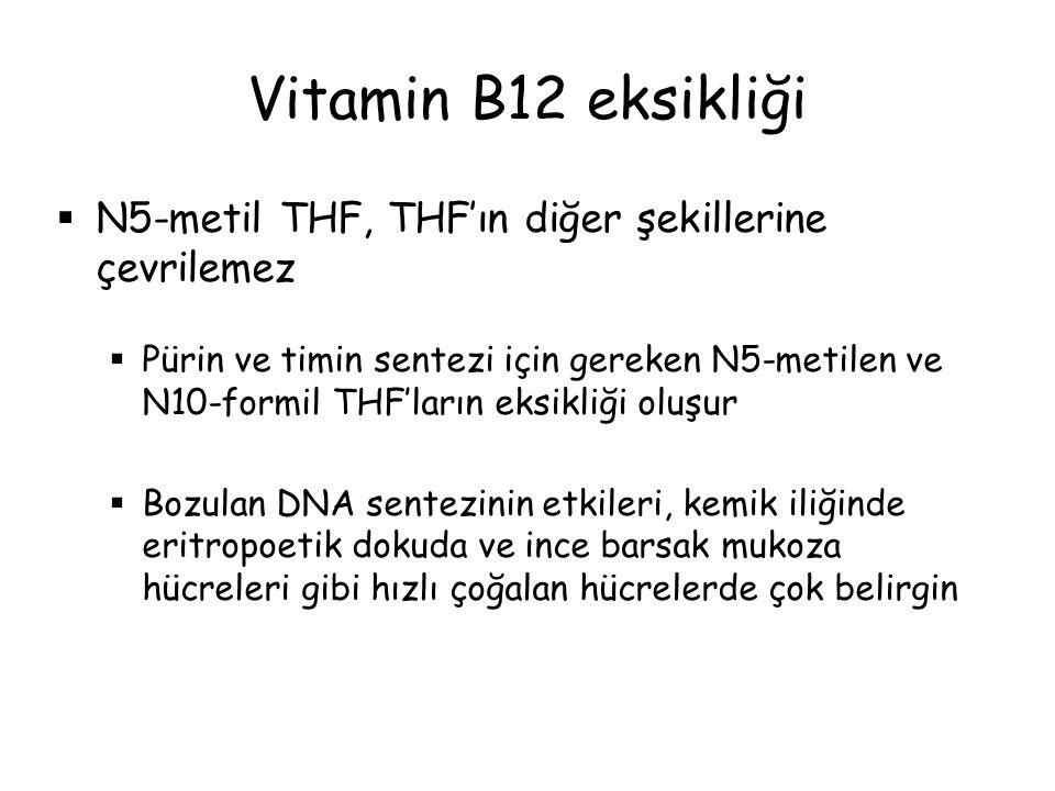  N5-metil THF, THF'ın diğer şekillerine çevrilemez  Pürin ve timin sentezi için gereken N5-metilen ve N10-formil THF'ların eksikliği oluşur  Bozula