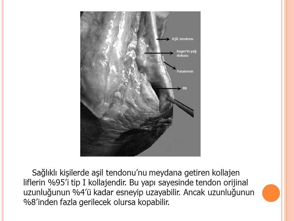 Sağlıklı kişilerde aşil tendonu'nu meydana getiren kollajen liflerin %95'i tip I kollajendir. Bu yapı sayesinde tendon orijinal uzunluğunun %4'ü kadar