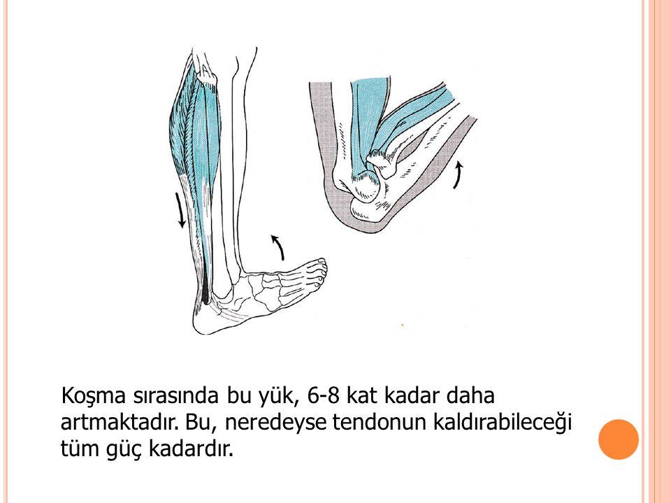 Koşma sırasında bu yük, 6-8 kat kadar daha artmaktadır. Bu, neredeyse tendonun kaldırabileceği tüm güç kadardır.
