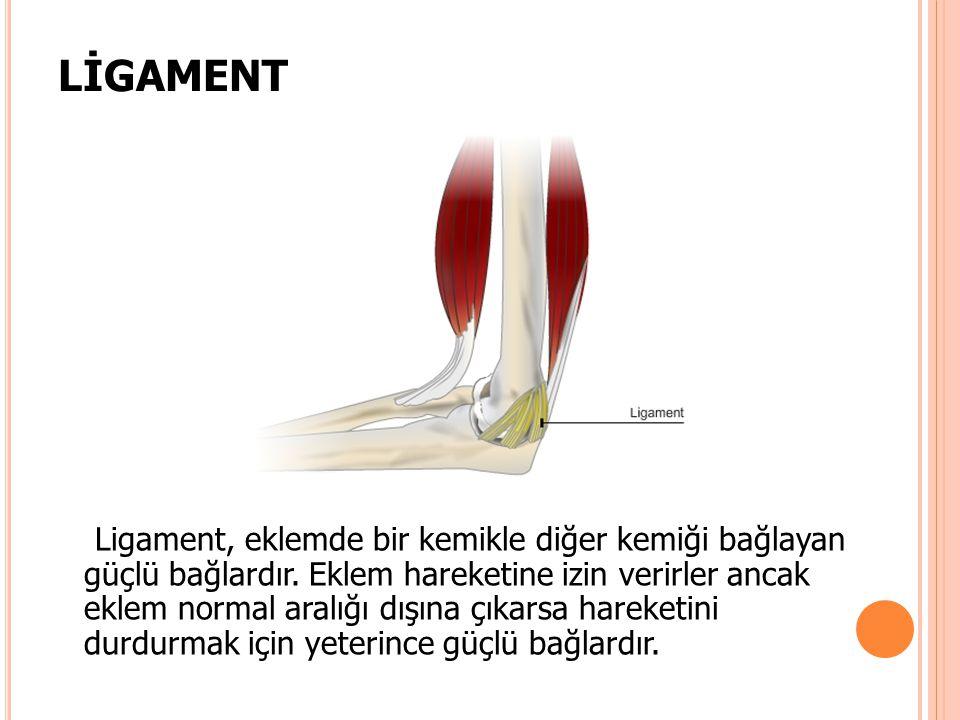 LİGAMENT Ligament, eklemde bir kemikle diğer kemiği bağlayan güçlü bağlardır. Eklem hareketine izin verirler ancak eklem normal aralığı dışına çıkarsa