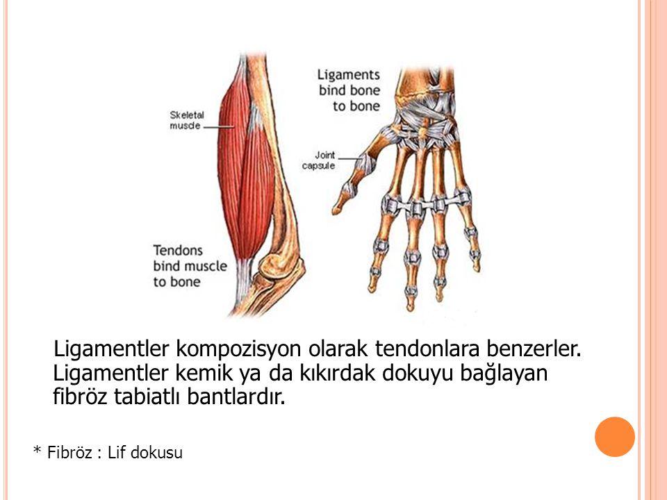Ligamentler kompozisyon olarak tendonlara benzerler. Ligamentler kemik ya da kıkırdak dokuyu bağlayan fibröz tabiatlı bantlardır. * Fibröz : Lif dokus