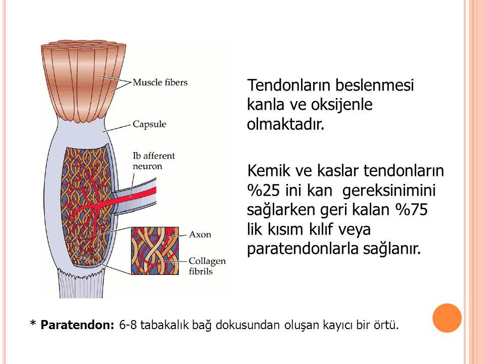 Tendonların 4 önemli kan kaynağı vardır: Kaslar Kemikler Synovial kılıf(eğer varsa difüzyonla beslenme olur) Paratendon (eğer kılıf yoksa )