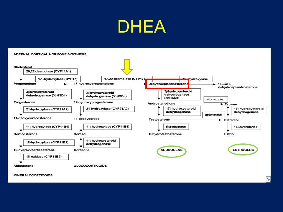 sulfataz DHEA S DHEAandrojen ve östrojenler DHEA over teka hücreleri ve adrenal kortekste yapılır.