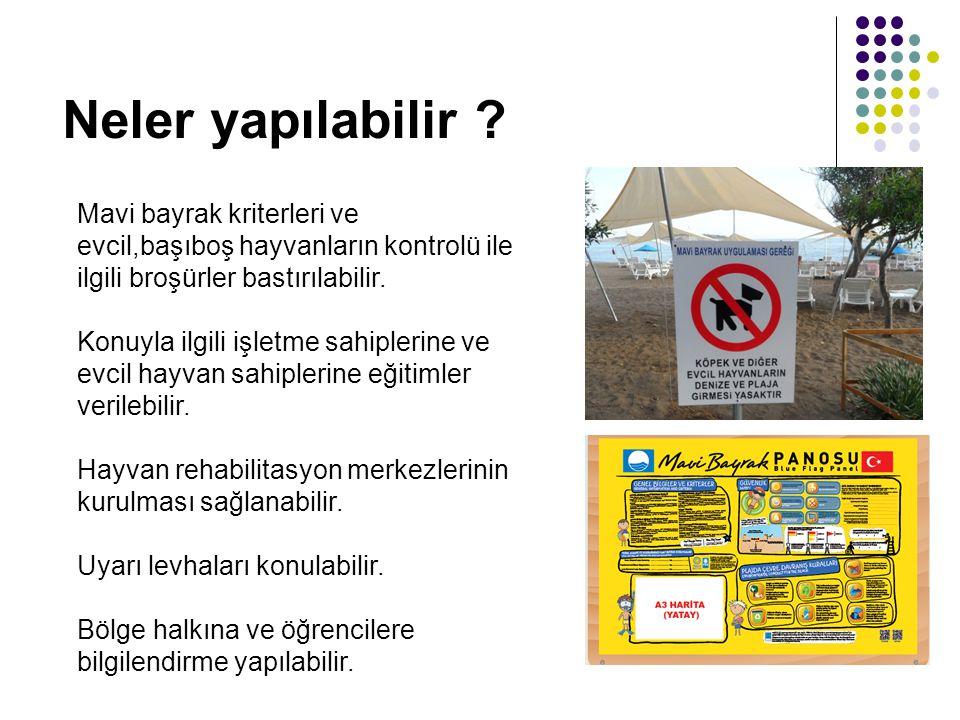 Mavi bayrak kriterleri ve evcil,başıboş hayvanların kontrolü ile ilgili broşürler bastırılabilir. Konuyla ilgili işletme sahiplerine ve evcil hayvan s