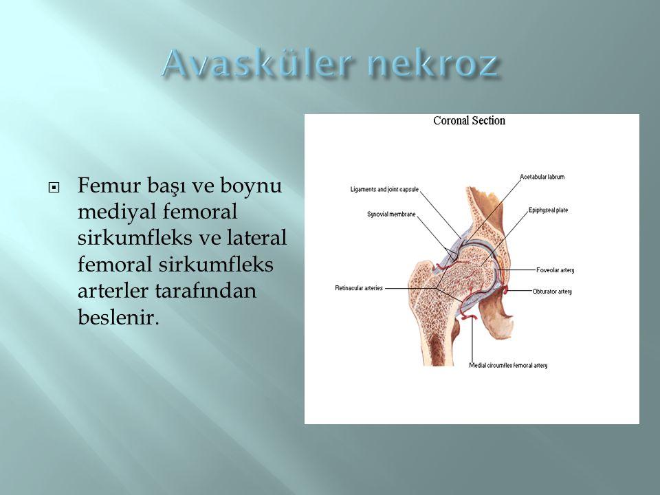  Femur başı ve boynu mediyal femoral sirkumfleks ve lateral femoral sirkumfleks arterler tarafından beslenir.