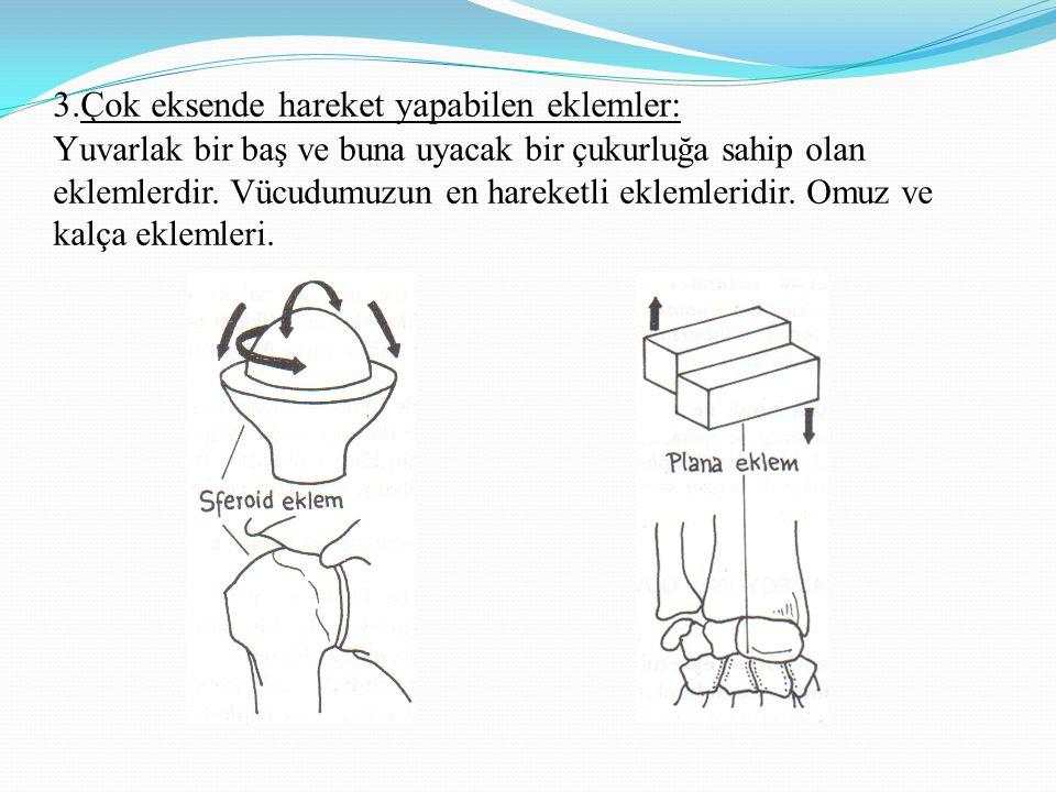 3.Çok eksende hareket yapabilen eklemler: Y uvarlak bir baş ve buna uyacak bir çukurluğa sahip olan eklemlerdir.