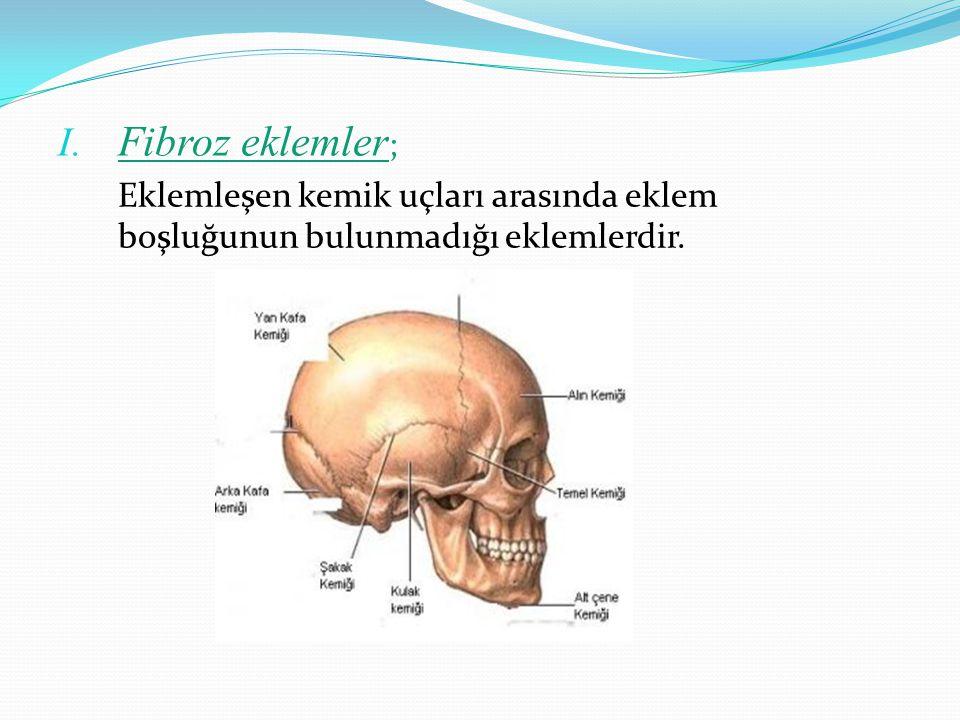 I. Fibroz eklemler ; Eklemleşen kemik uçları arasında eklem boşluğunun bulunmadığı eklemlerdir.