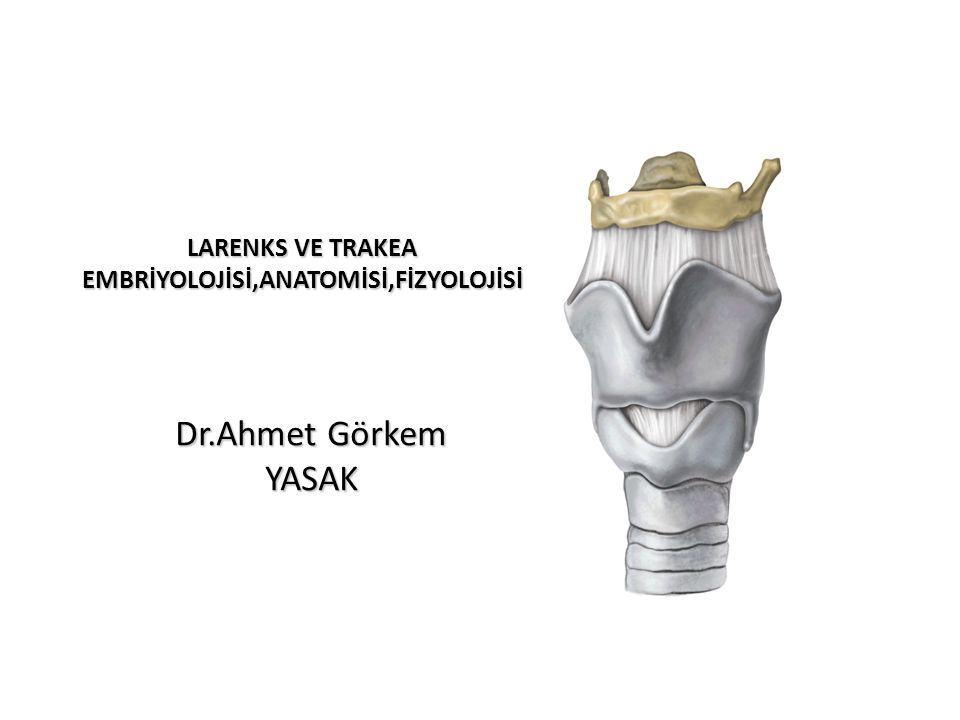 LARENKS VE TRAKEA EMBRİYOLOJİSİ,ANATOMİSİ,FİZYOLOJİSİ Dr.Ahmet Görkem YASAK