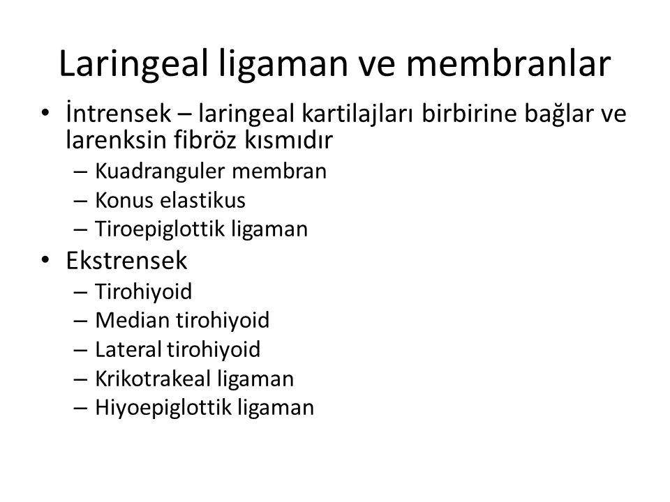 Laringeal ligaman ve membranlar İntrensek – laringeal kartilajları birbirine bağlar ve larenksin fibröz kısmıdır – Kuadranguler membran – Konus elasti