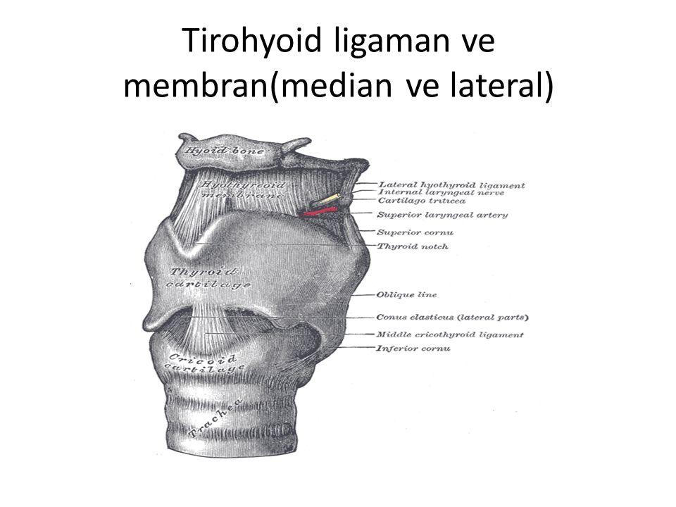 Tirohyoid ligaman ve membran(median ve lateral)