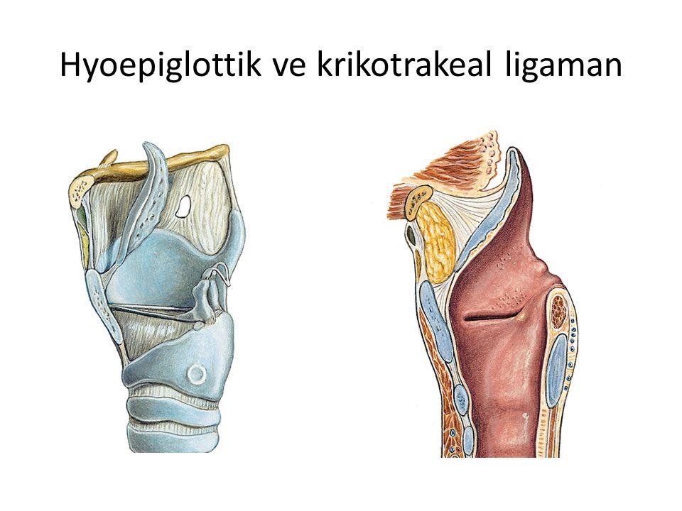 Hyoepiglottik ve krikotrakeal ligaman