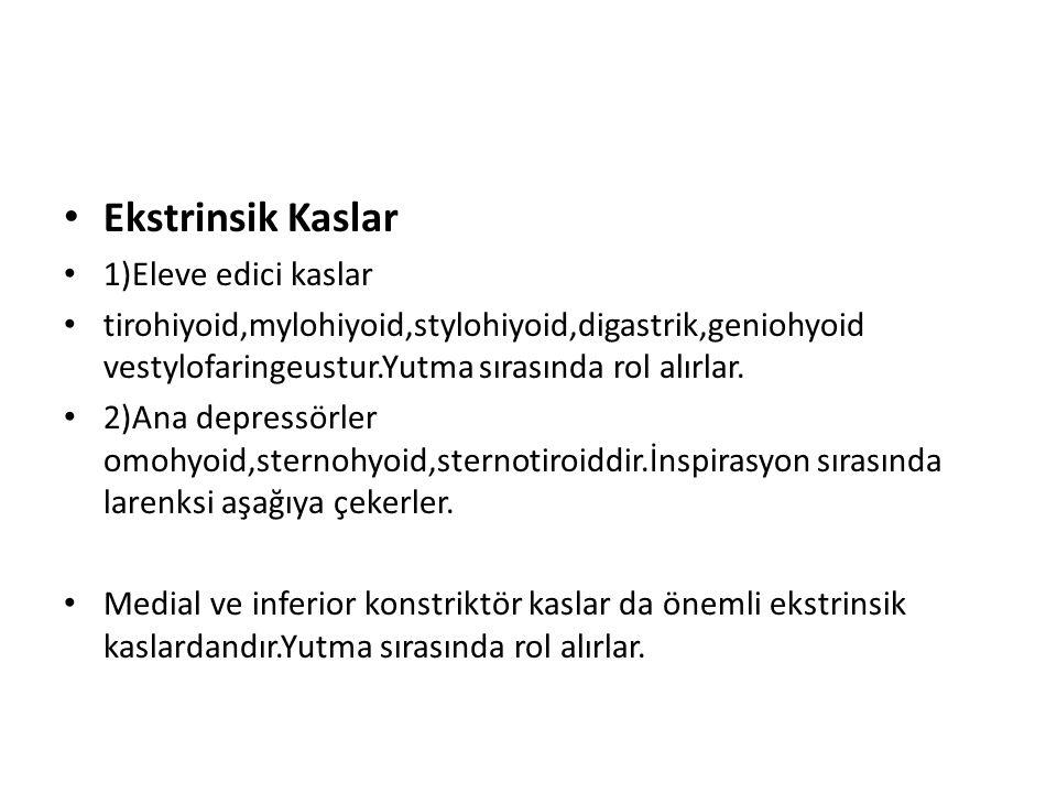 Ekstrinsik Kaslar 1)Eleve edici kaslar tirohiyoid,mylohiyoid,stylohiyoid,digastrik,geniohyoid vestylofaringeustur.Yutma sırasında rol alırlar. 2)Ana d