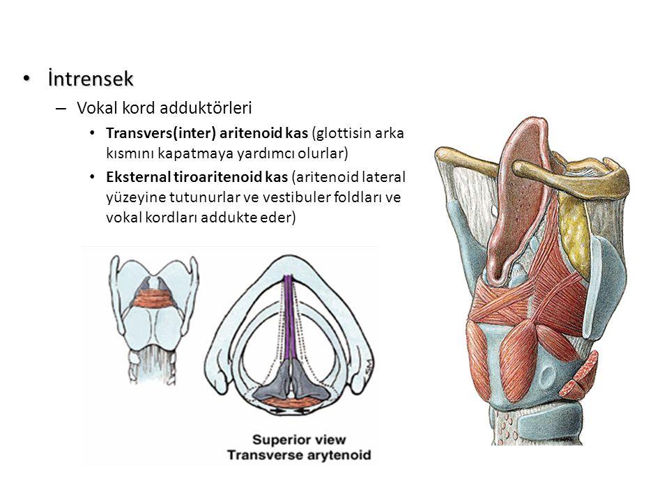 İntrensek İntrensek – Vokal kord adduktörleri Transvers(inter) aritenoid kas (glottisin arka kısmını kapatmaya yardımcı olurlar) Eksternal tiroariteno