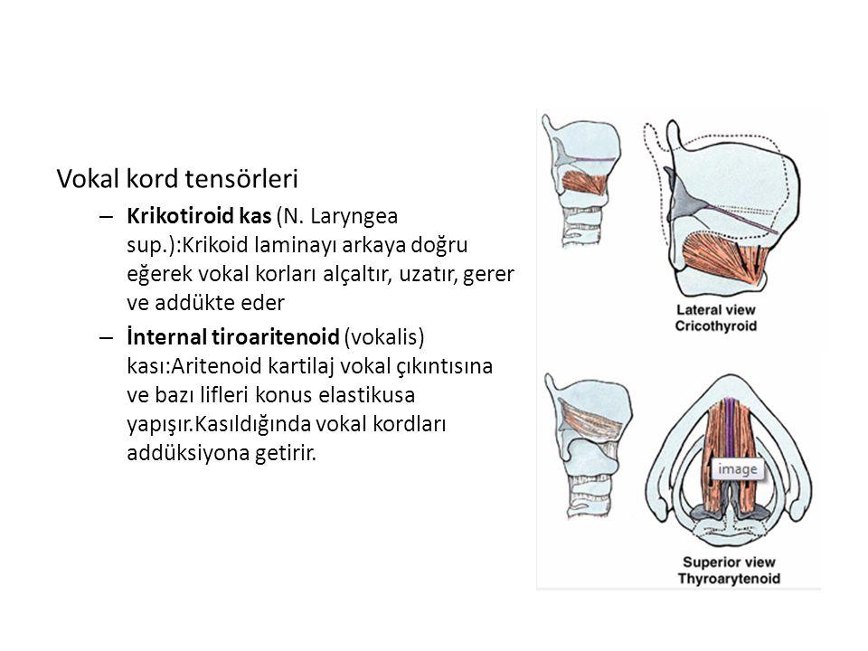 Vokal kord tensörleri – Krikotiroid kas (N. Laryngea sup.):Krikoid laminayı arkaya doğru eğerek vokal korları alçaltır, uzatır, gerer ve addükte eder