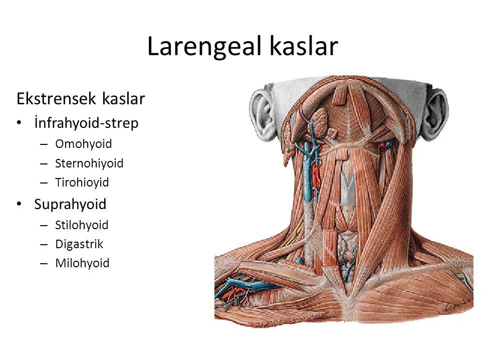 Larengeal kaslar Ekstrensek kaslar İnfrahyoid-strep – Omohyoid – Sternohiyoid – Tirohioyid Suprahyoid – Stilohyoid – Digastrik – Milohyoid