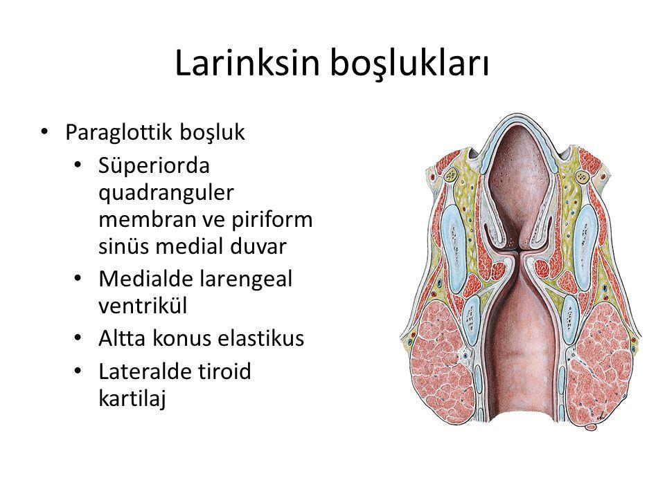 Larinksin boşlukları Paraglottik boşluk Süperiorda quadranguler membran ve piriform sinüs medial duvar Medialde larengeal ventrikül Altta konus elasti