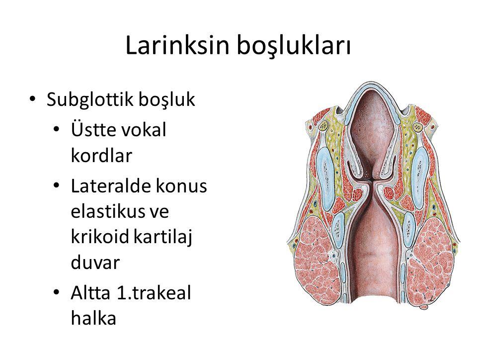 Larinksin boşlukları Subglottik boşluk Üstte vokal kordlar Lateralde konus elastikus ve krikoid kartilaj duvar Altta 1.trakeal halka