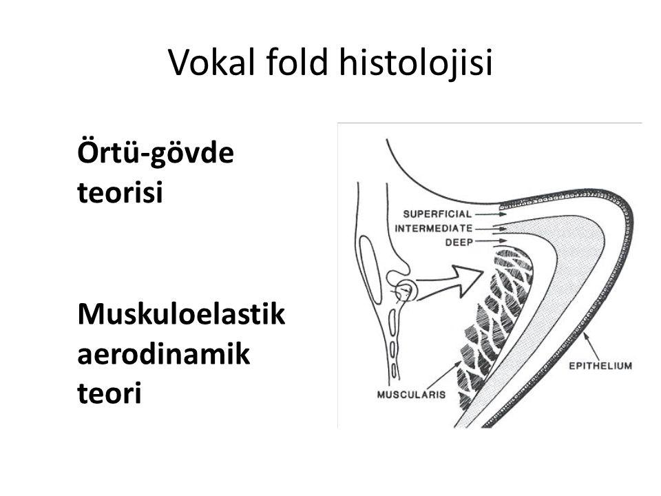 Vokal fold histolojisi Örtü-gövde teorisi Muskuloelastik aerodinamik teori