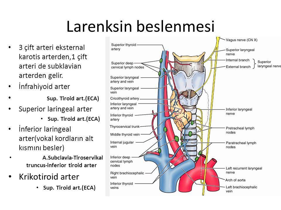 Larenksin beslenmesi 3 çift arteri eksternal karotis arterden,1 çift arteri de subklavian arterden gelir. İnfrahiyoid arter Sup. Tiroid art.(ECA) Supe