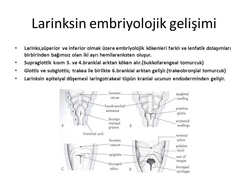Larengeal kaslar Ekstrensek kaslar Farengeal kaslar – Stilofarengeal kas – Palatofarengeal – İnferior ve orta konstruktör kas