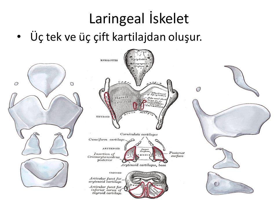 Tiroid kartilaj 2 lamina(quadranguler), superior ve inferior boynuz İncisura tyroidea Prominentia laryngea (adem elması) Kalsifikasyon 23-65 yaş Tiroid lamina açısı – Erkek: 90 – Kadın: 120 Lamina erkeklerde 1 cm daha uzun Oblik çizgi – Sternotiroid kas – Tirohiyoid kas – İnferior konstruktör kas
