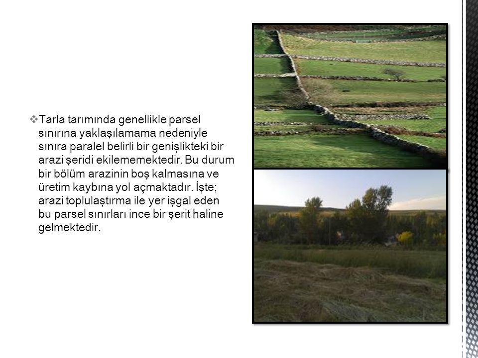  Tarla tarımında genellikle parsel sınırına yaklaşılamama nedeniyle sınıra paralel belirli bir genişlikteki bir arazi şeridi ekilememektedir. Bu duru