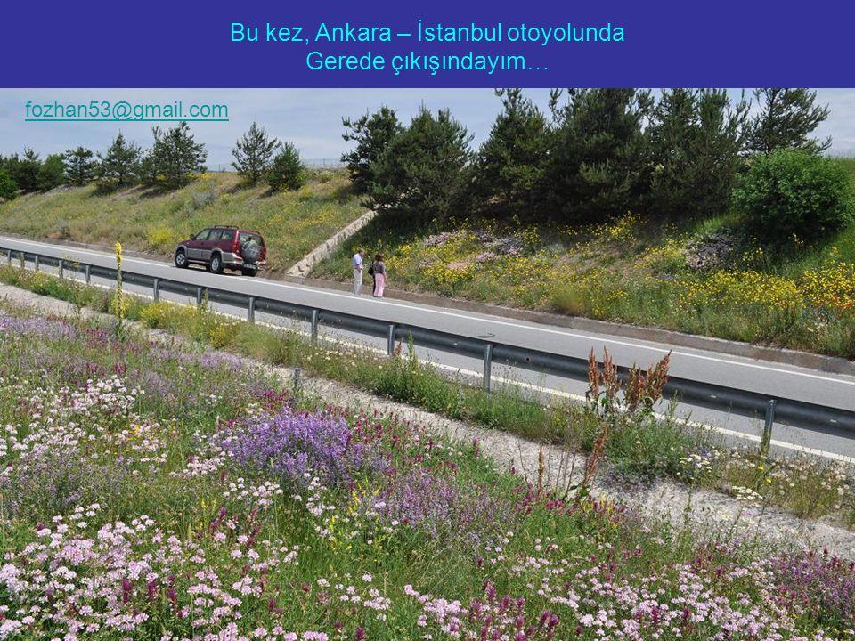 Bu kez, Ankara – İstanbul otoyolunda Gerede çıkışındayım… fozhan53@gmail.com