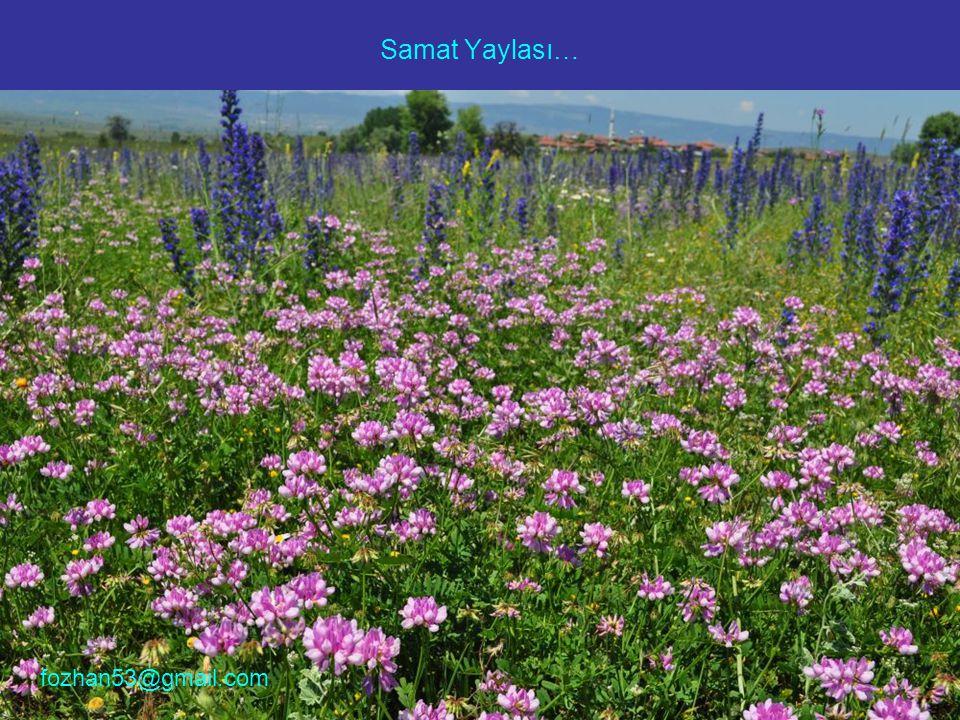 Samat Yaylası… fozhan53@gmail.com