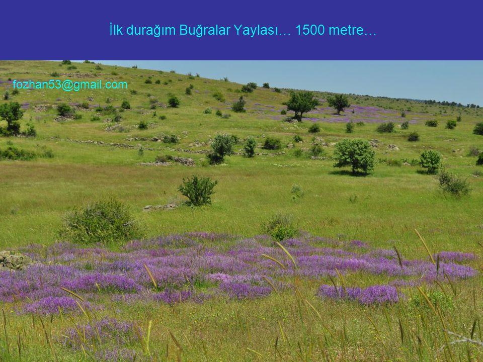 İlk durağım Buğralar Yaylası… 1500 metre… fozhan53@gmail.com