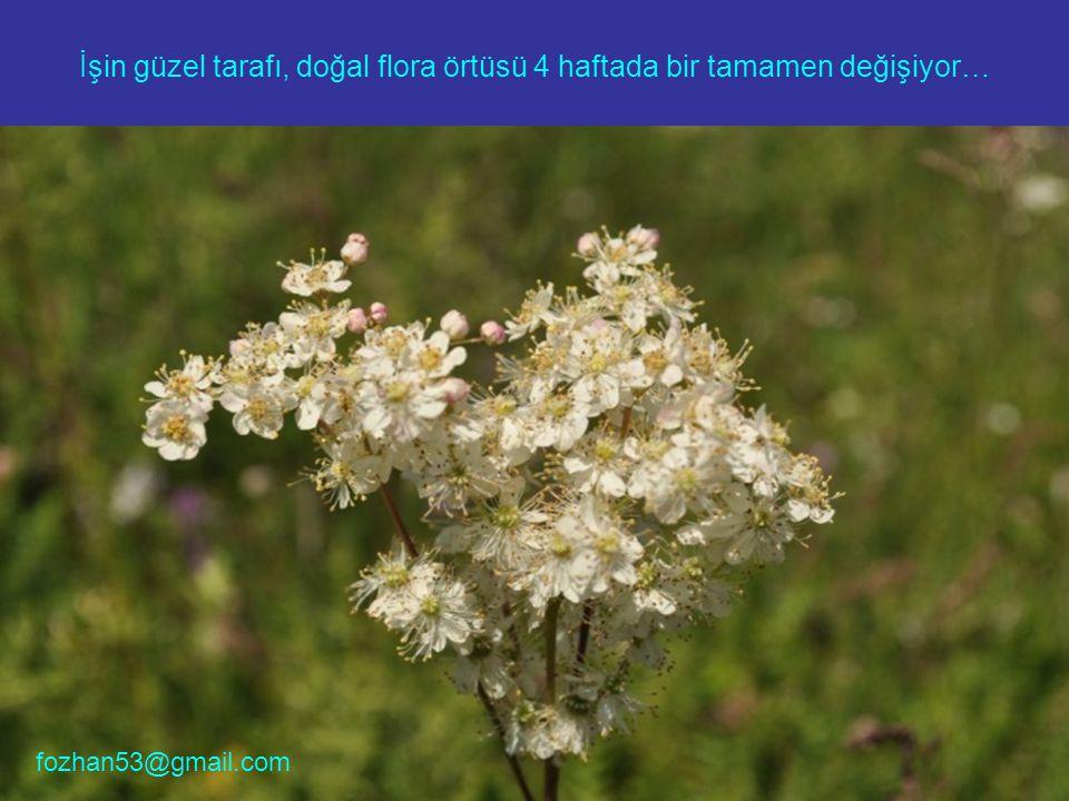 İşin güzel tarafı, doğal flora örtüsü 4 haftada bir tamamen değişiyor… fozhan53@gmail.com