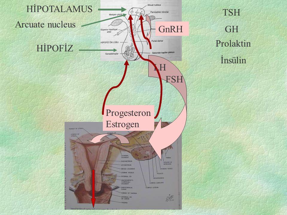 GnRH LH HİPOTALAMUS HİPOFİZ Arcuate nucleus Progesteron Estrogen FSH TSH GH Prolaktin İnsülin