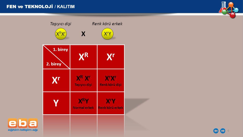 FEN ve TEKNOLOJİ / KALITIM 6 1. birey 2. birey XRXR XrXr XrXr Y X R X r Taşıyıcı dişi X r Renk körü dişi X R Y Normal erkek X r Y Renk körü erkek X R